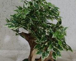Bonsai Majestoso