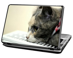 Skin Para Notebook - Old Cat