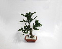 Arranjo Bonsai Artificial Fícus
