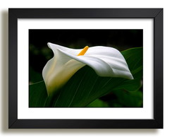 Quadro Floral Arranjo Decorativo F36