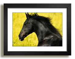 Quadro Cavalo Animal Africa Decor F37