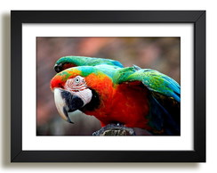 Quadro Arara Mundo Animal Decor Sala F37