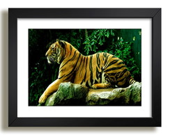 Quadro Tigre Mundo Animal Decorativo F37