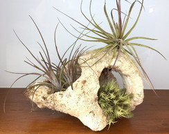 Arranjo Air Plants - Coral