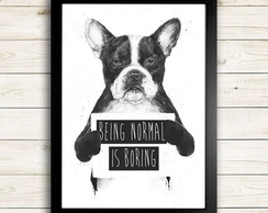 Quadro 21X30cm - DOG - BEING NORMAL IS BORING