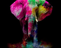 Elefante Colorful