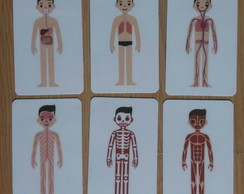 Kit 6 flashcards Corpo Humano metodo montessori