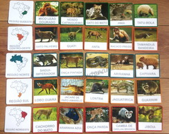 Kit 30 flashcards Animais por região do Brasil montessori