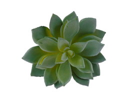 Suculenta artificial Echeveria