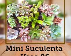 Mini suculentas p decorar