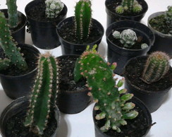 Kit com 5 mini-cactos variados
