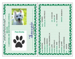 RG Documento Dog Cachorro gato