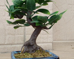 Bonsai Raiz 003 artificial.