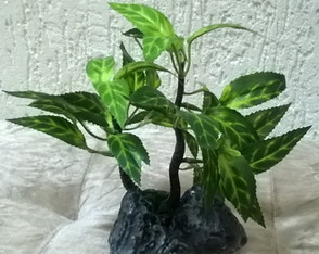 Bonsai Pedra Long.