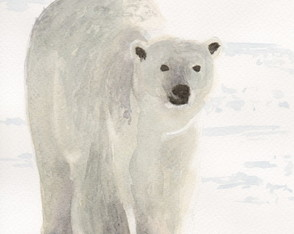 Urso Polar _ aquarela _ original