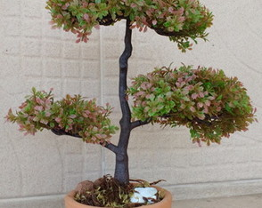 Bonsai Decor artificial.
