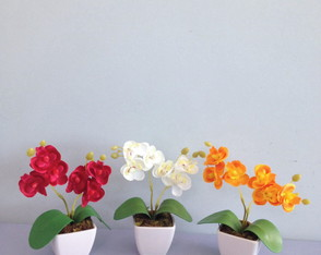 TRIO DE ARRANJOS COM MINI ORQUÍDEAS