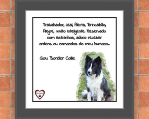 Quadro Pet Personalizado Border Collie