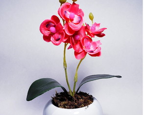 Arranjo Mini Orquídea
