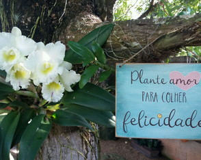 Placa Decorativa Plante Amor