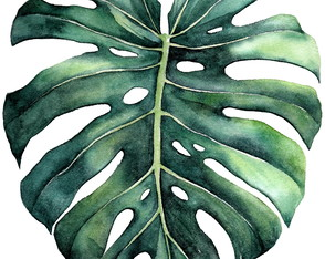 Monstera // gravura A4