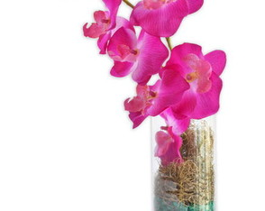 orquidea-lilas-do-nilo