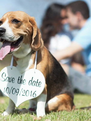 Placa Save the Date p/ 1 PET Bca