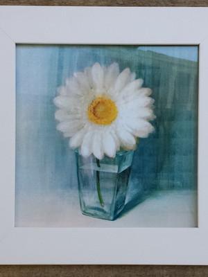 Kit 2 Quadros Brancos de Flores com vidro Tam 23 cm cada