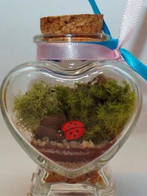 Mini terrário coração joaninha (P156)