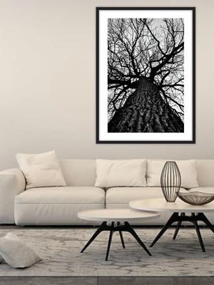 Quadro Árvore Minimalista, com Vidro, 60 x 80 cm