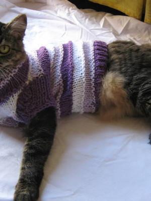 Pulover de tricô para gatos