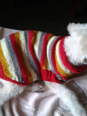 Pulover de tricô para cães
