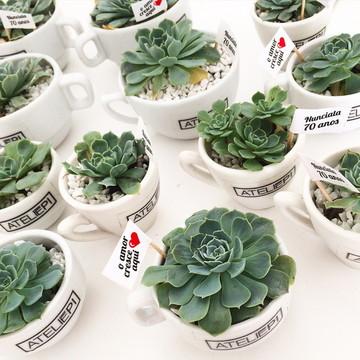 Suculentas em Xícaras de Porcelana