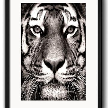 Quadro Tigre Preto Branco com Paspatur
