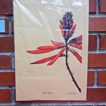 Flor do cerrado Lapis de cor