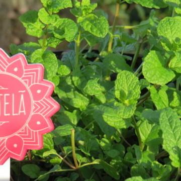 Placa para Horta e Jardim Estrela