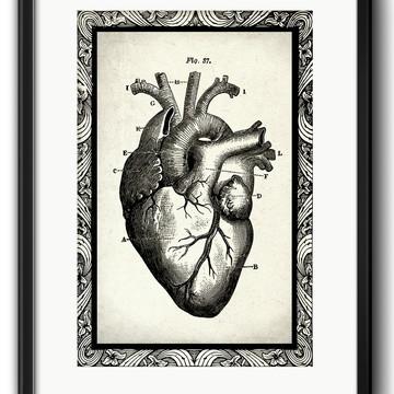Quadro Coração Corpo Humano Anatomia Decoração com Paspatur