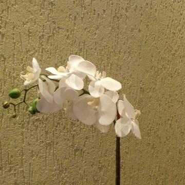 Haste de orquídea