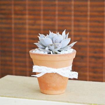 Mini Vaso de Cerâmica com Suculenta