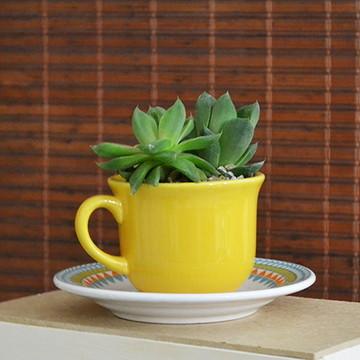 Mini Jardim em Xícara de Chá