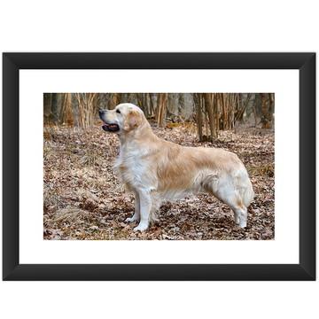 Quadro Pets De Estimacao Cachorro Dogs