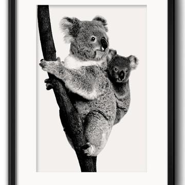 Quadro Koalas Preto Branco com Paspatur