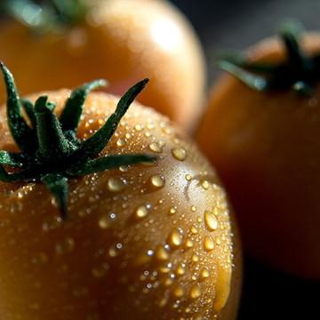 Tomate 01