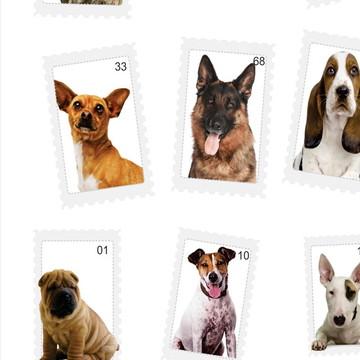 Papel de Parede Animais cachorros 16