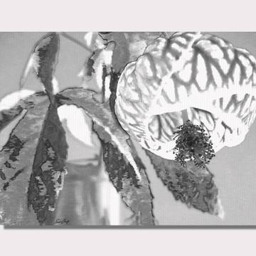 Tela Flor Abutilon Preto e Branco