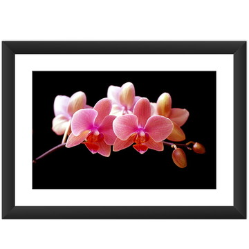 Quadro Orquídea Flor Natureza Decoracao