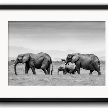 Quadro Elefantes Preto Branco Paspatur