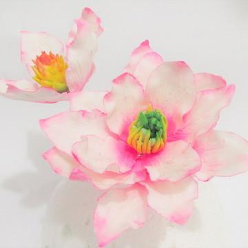 Magnólia rosa de açúcar