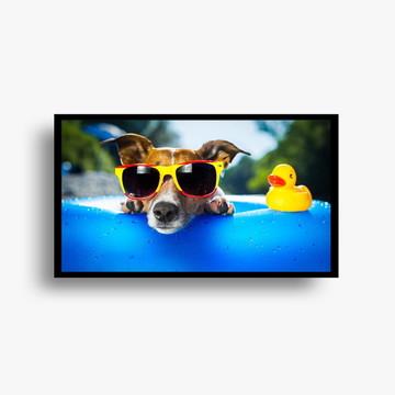 Pôster c/ moldura - Catioro na piscina
