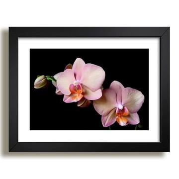 Quadro Flores Natureza Decorativo F36
